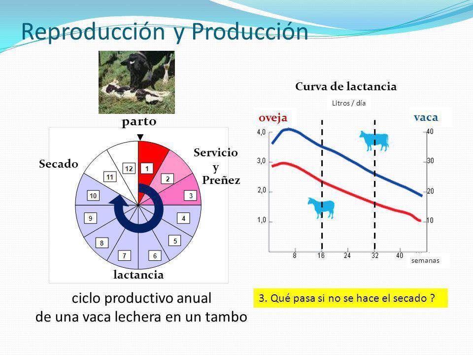 Reproducción y Producción