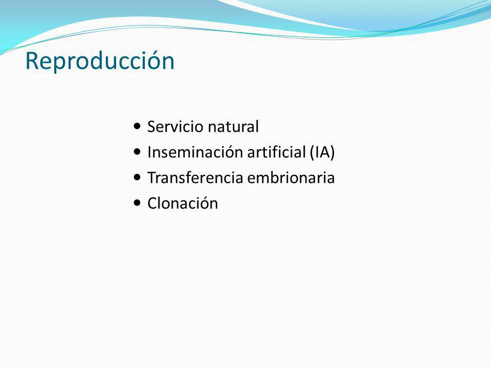 Reproducción Servicio natural Inseminación artificial (IA)