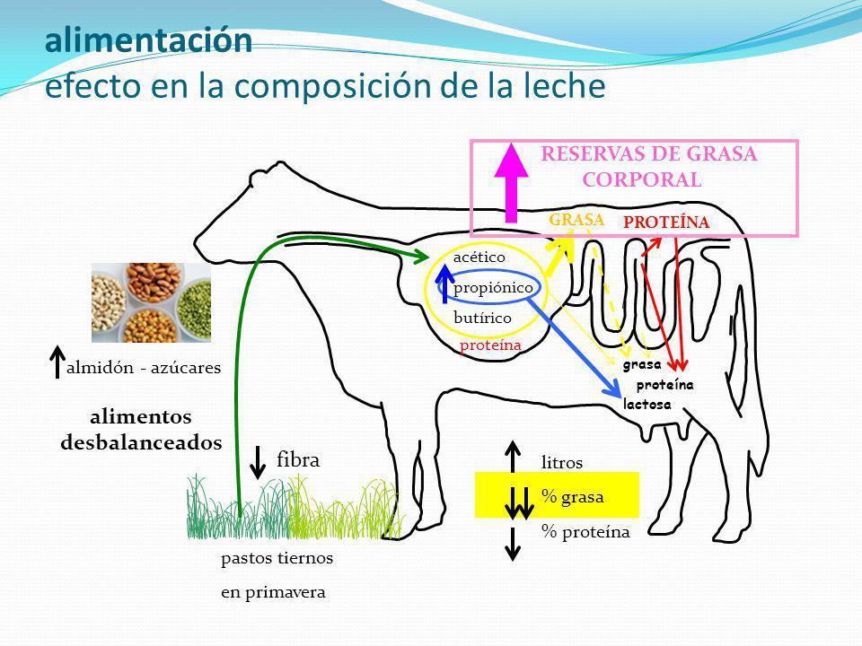 alimentación efecto en la composición de la leche