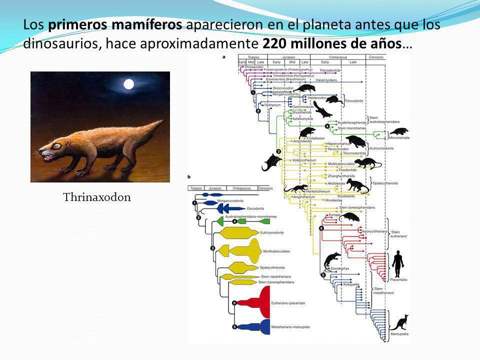 Los primeros mamíferos aparecieron en el planeta antes que los dinosaurios, hace aproximadamente 220 millones de años…