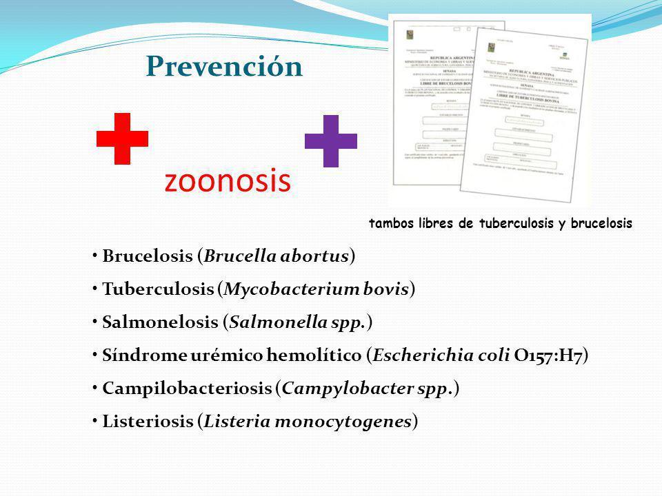 zoonosis Prevención Brucelosis (Brucella abortus)