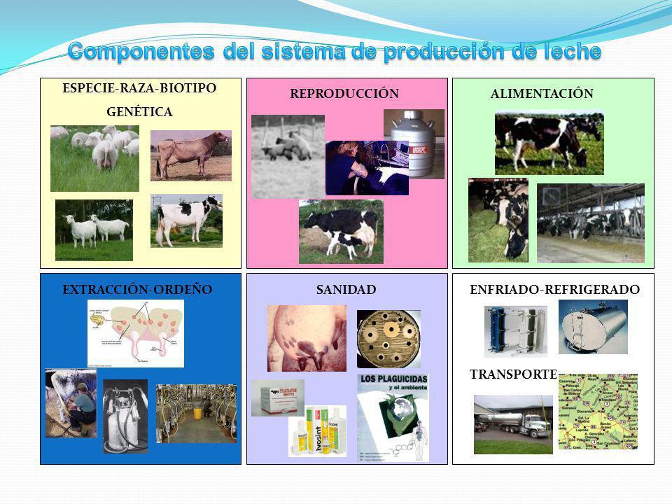 Componentes del sistema de producción de leche