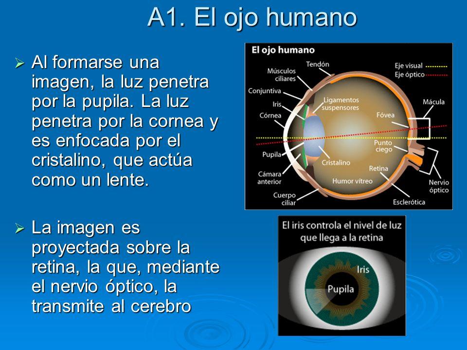 A1. El ojo humano