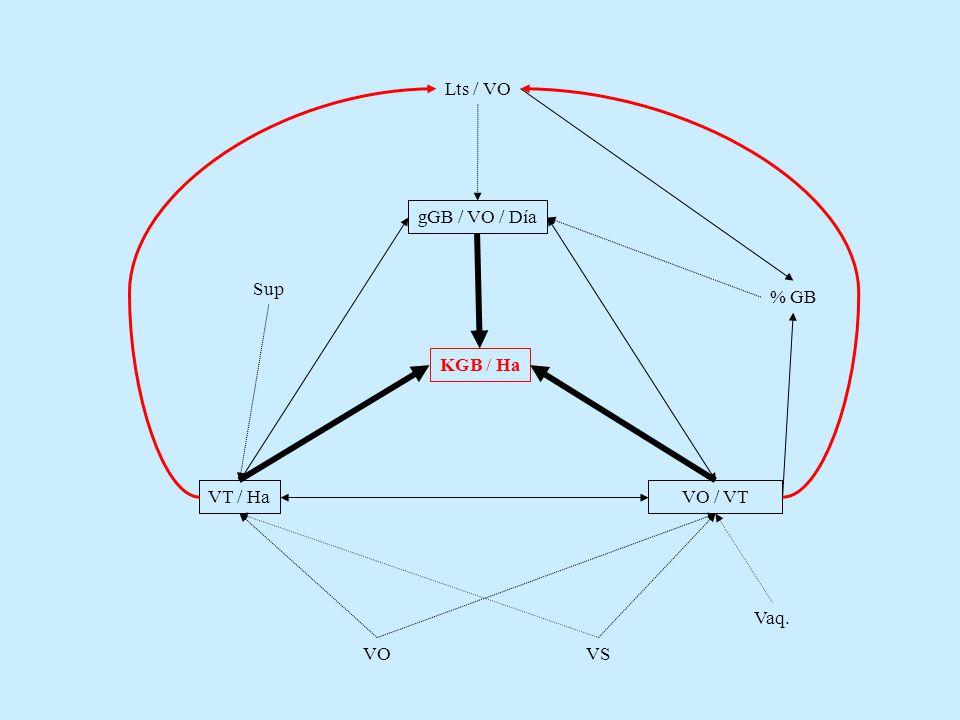 Lts / VO % GB KGB / Ha gGB / VO / Día VT / Ha VO / VT Sup VO VS Vaq.