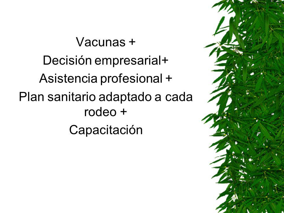 Decisión empresarial+ Asistencia profesional +