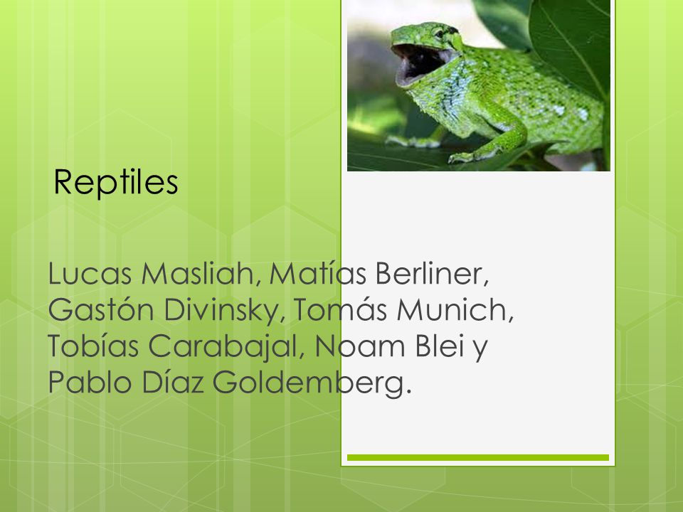 Reptiles Lucas Masliah, Matías Berliner, Gastón Divinsky, Tomás Munich, Tobías Carabajal, Noam Blei y Pablo Díaz Goldemberg.