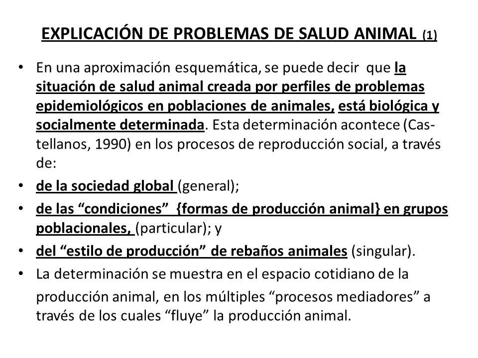 EXPLICACIÓN DE PROBLEMAS DE SALUD ANIMAL (1)