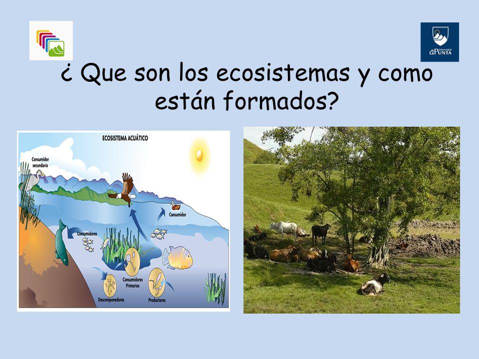 ¿ Que son los ecosistemas y como están formados