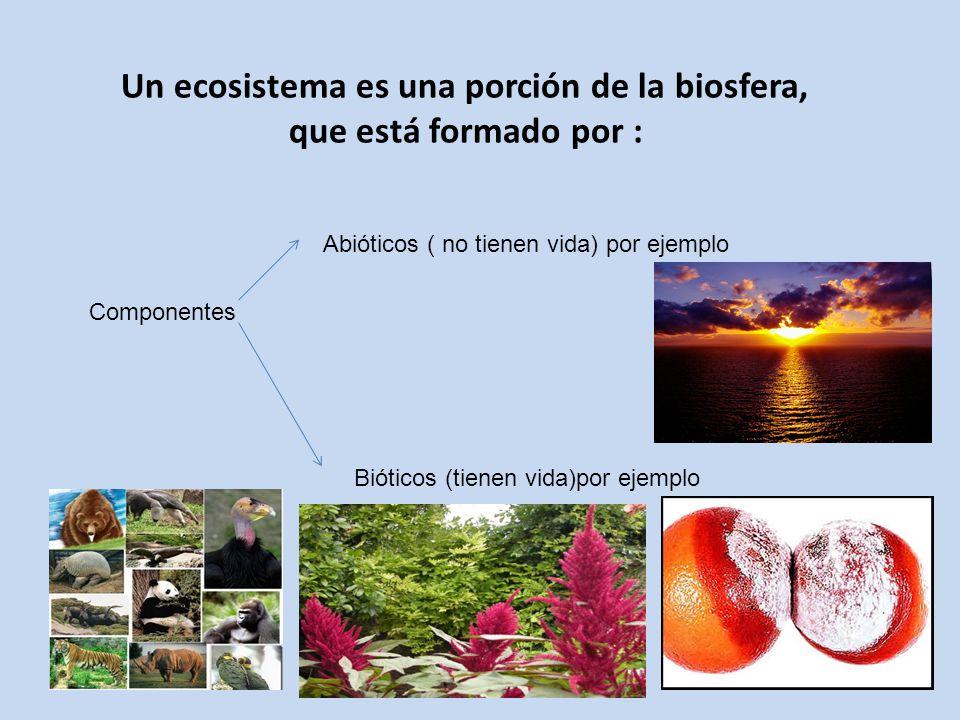 Un ecosistema es una porción de la biosfera,
