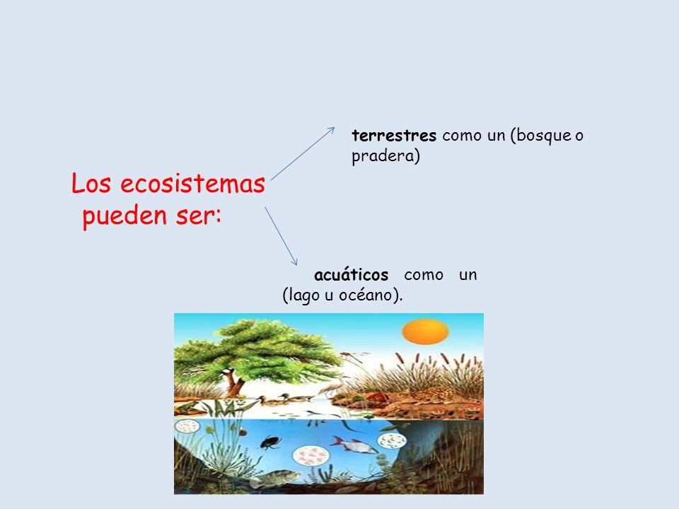 Los ecosistemas pueden ser: