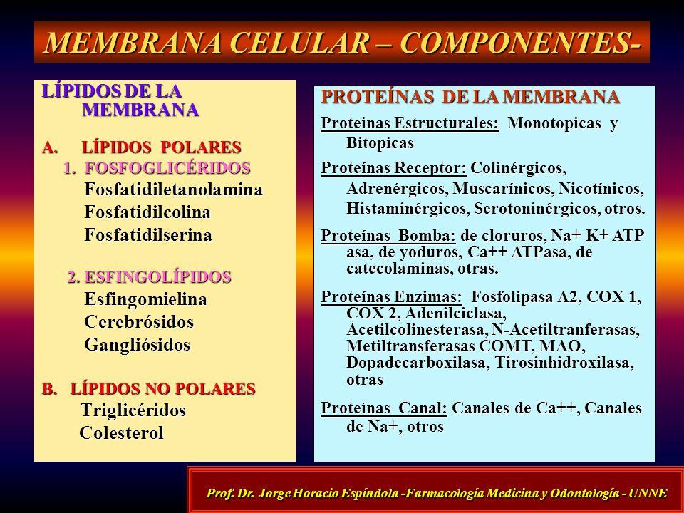 MEMBRANA CELULAR – COMPONENTES-