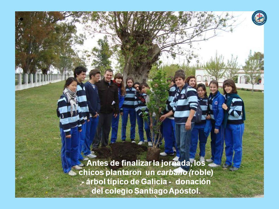 - árbol típico de Galicia - donación del colegio Santiago Apóstol.