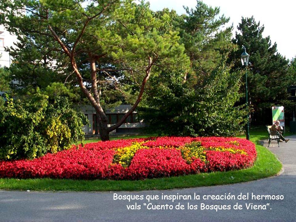 Bosques que inspiran la creación del hermoso