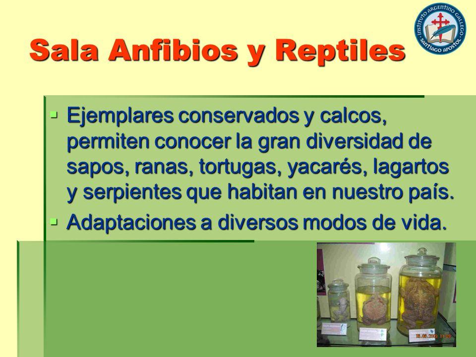 Sala Anfibios y Reptiles