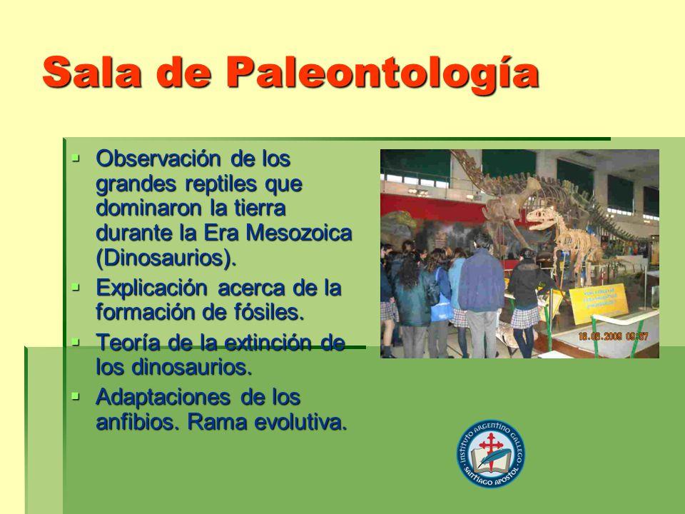 Sala de Paleontología Observación de los grandes reptiles que dominaron la tierra durante la Era Mesozoica (Dinosaurios).