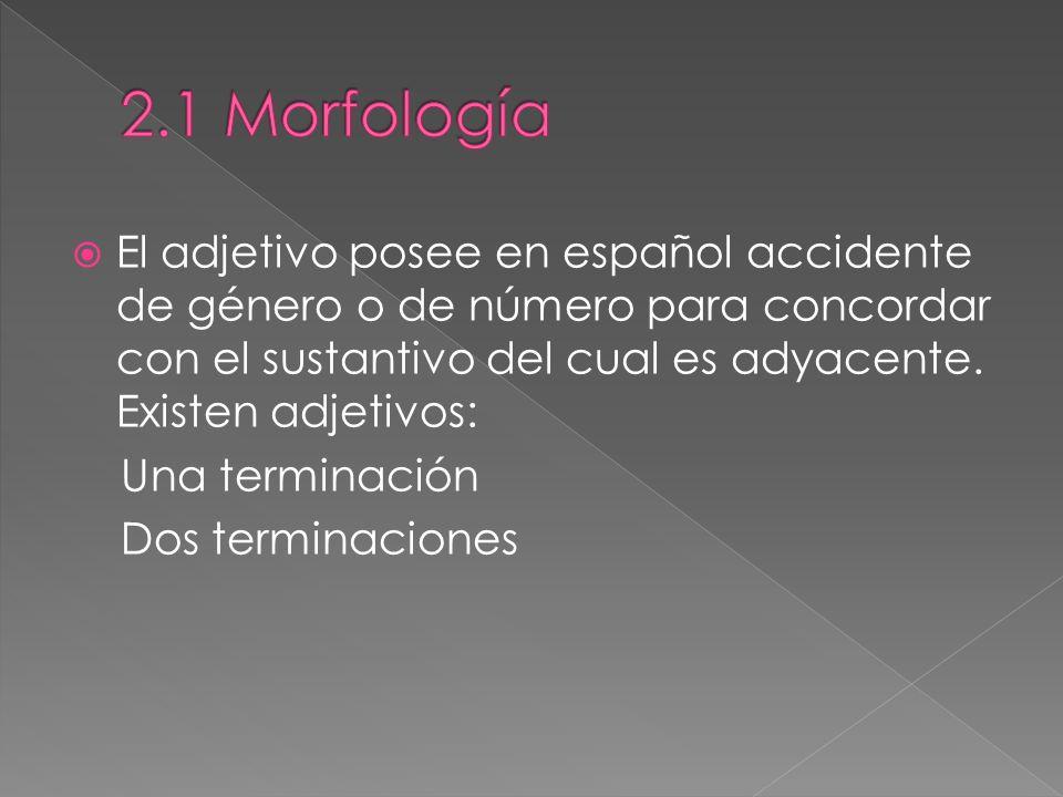 2.1 Morfología