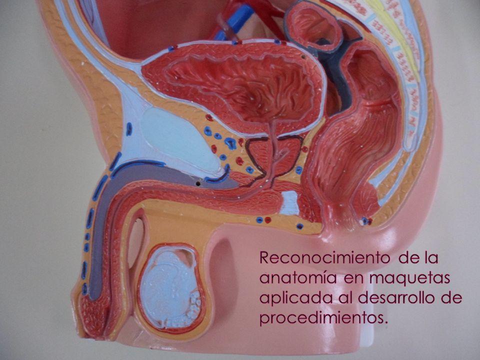 Reconocimiento de la anatomía en maquetas aplicada al desarrollo de procedimientos.