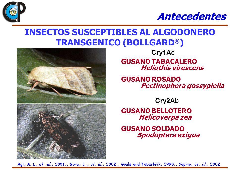 INSECTOS SUSCEPTIBLES AL ALGODONERO TRANSGENICO (BOLLGARD®)