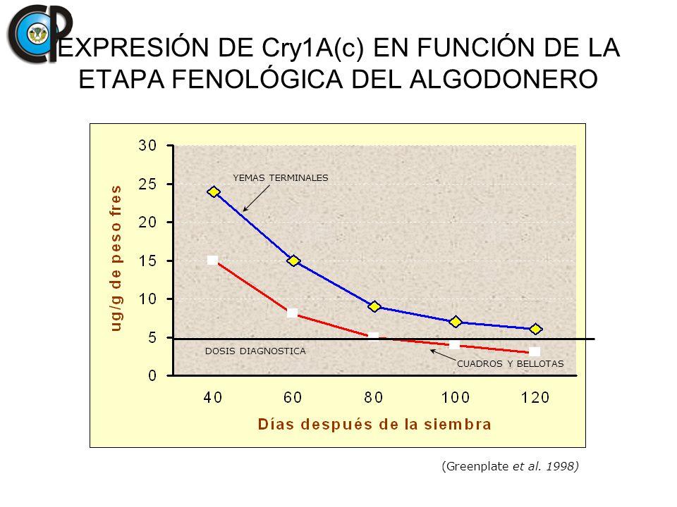 EXPRESIÓN DE Cry1A(c) EN FUNCIÓN DE LA ETAPA FENOLÓGICA DEL ALGODONERO