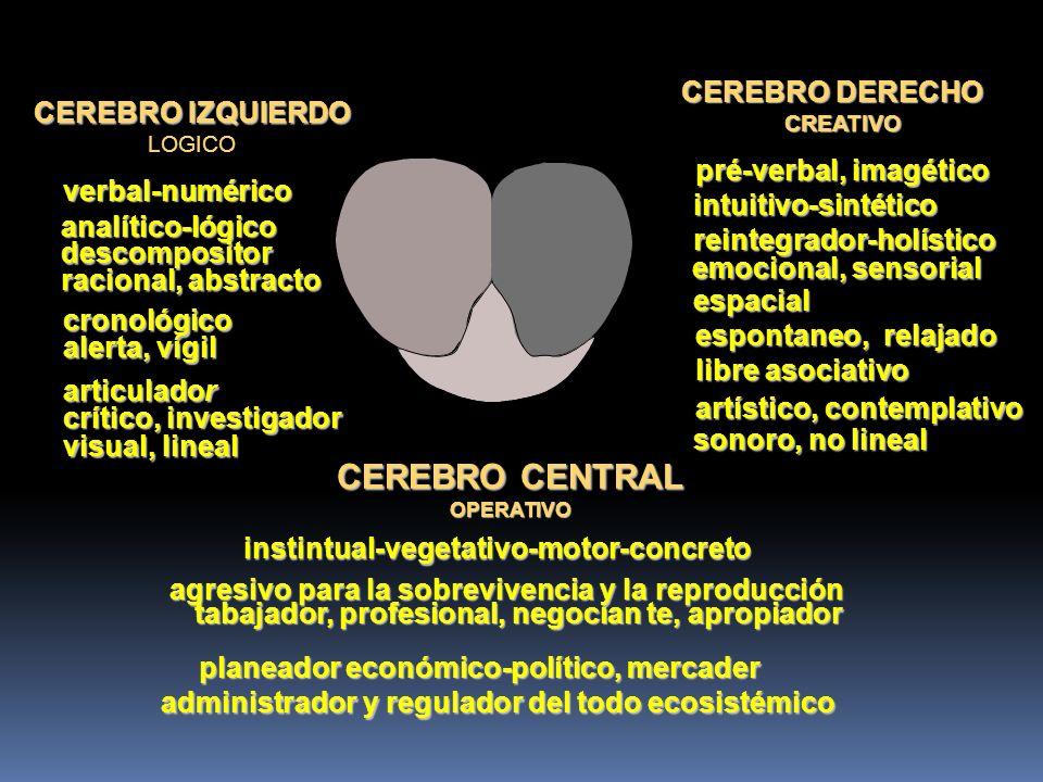 CEREBRO CENTRAL CEREBRO DERECHO CEREBRO IZQUIERDO