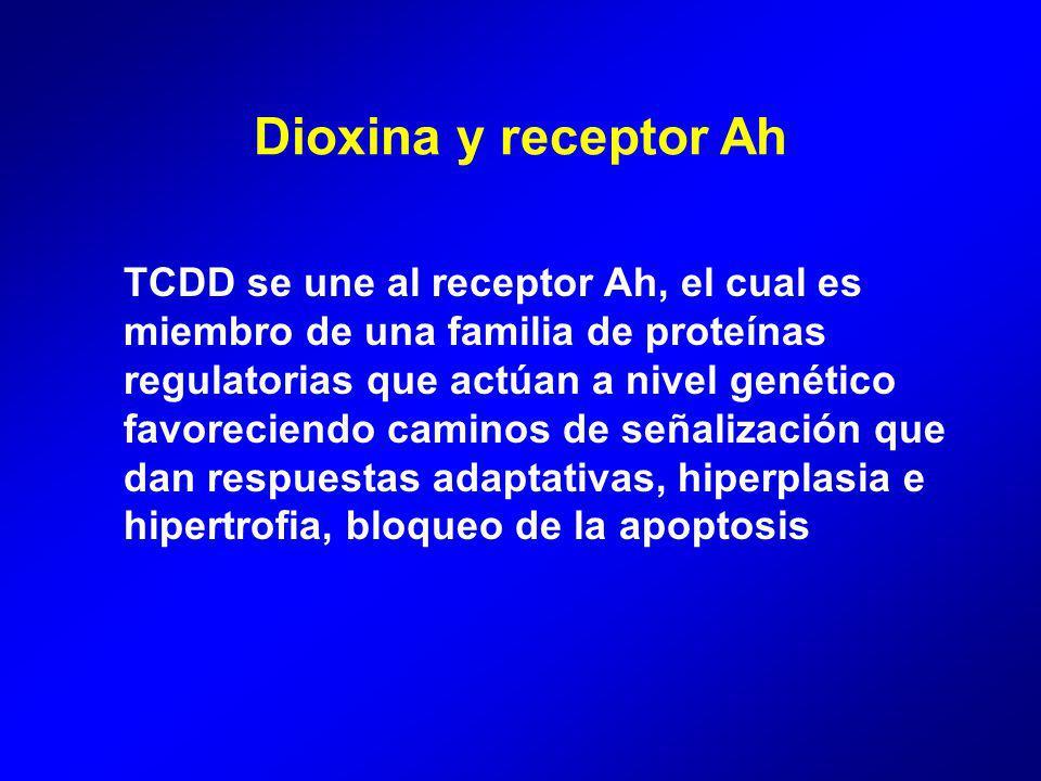 Dioxina y receptor Ah TCDD se une al receptor Ah, el cual es miembro de una familia de proteínas regulatorias que actúan a nivel genético.