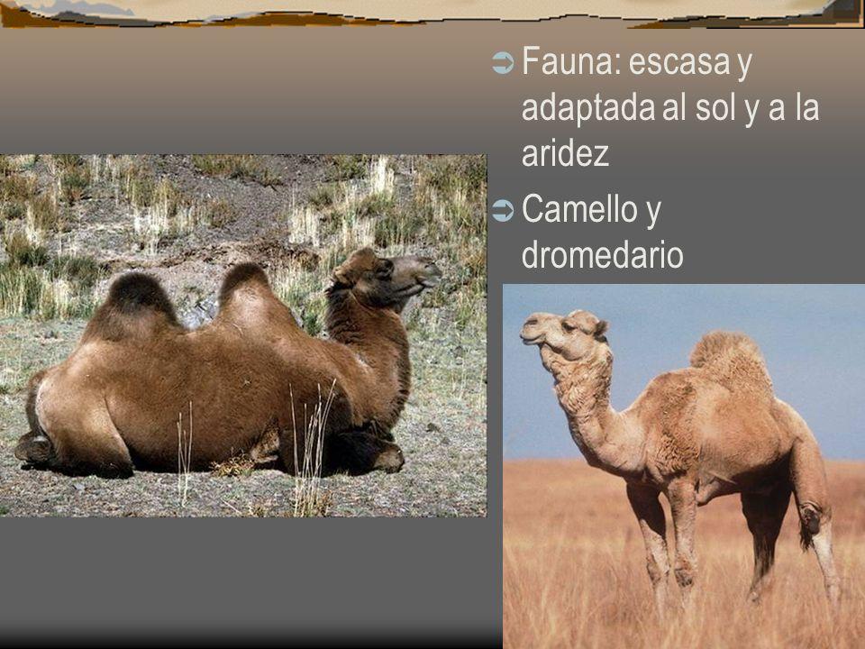 Fauna: escasa y adaptada al sol y a la aridez