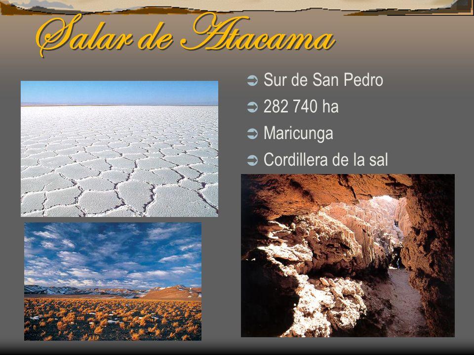 Salar de Atacama Sur de San Pedro 282 740 ha Maricunga