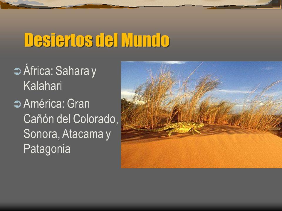 Desiertos del Mundo África: Sahara y Kalahari