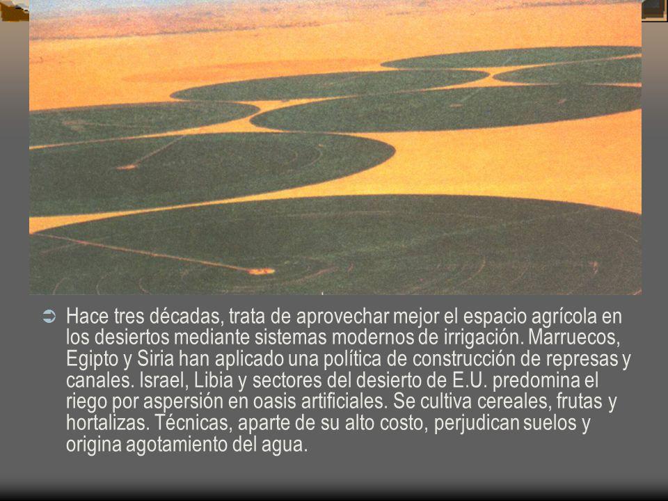 Hace tres décadas, trata de aprovechar mejor el espacio agrícola en los desiertos mediante sistemas modernos de irrigación.