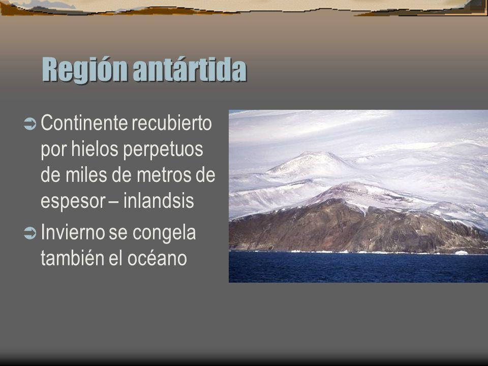 Región antártidaContinente recubierto por hielos perpetuos de miles de metros de espesor – inlandsis.