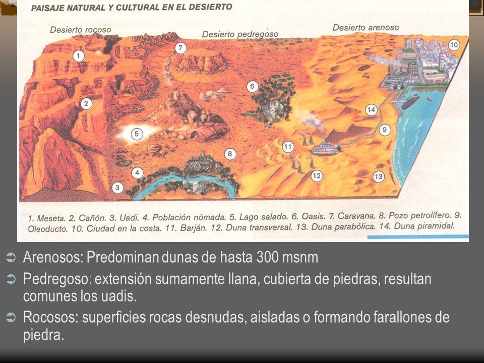 Arenosos: Predominan dunas de hasta 300 msnm
