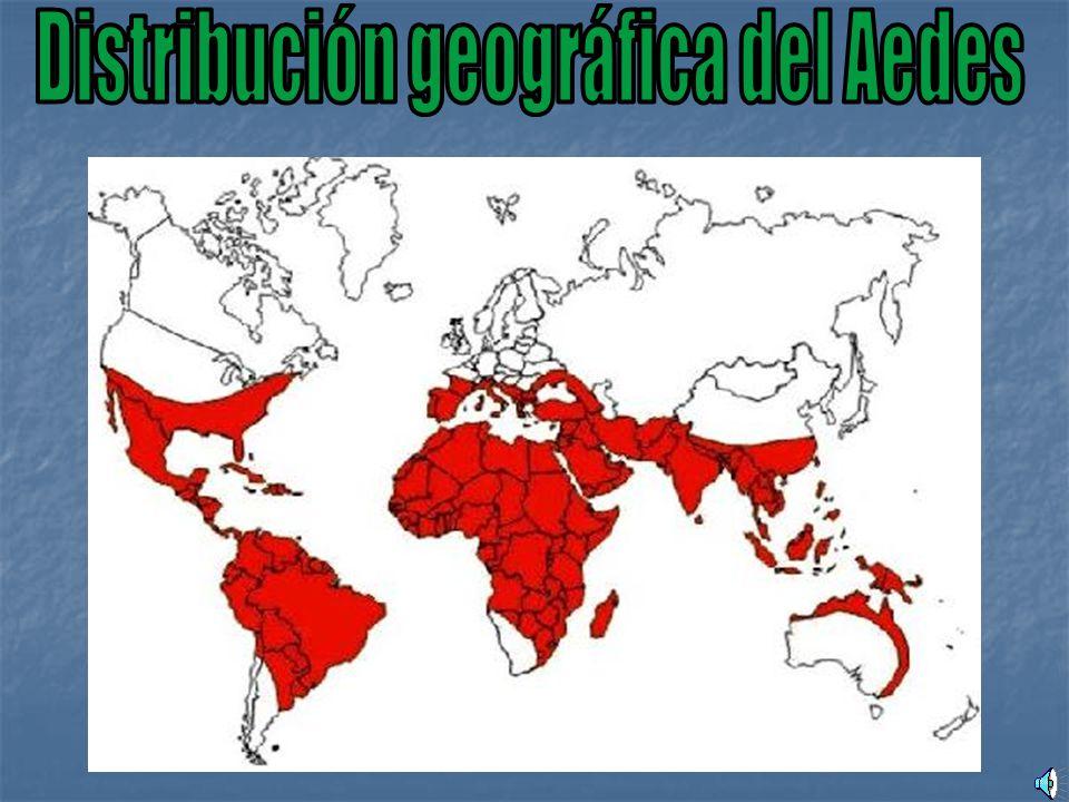 Distribución geográfica del Aedes