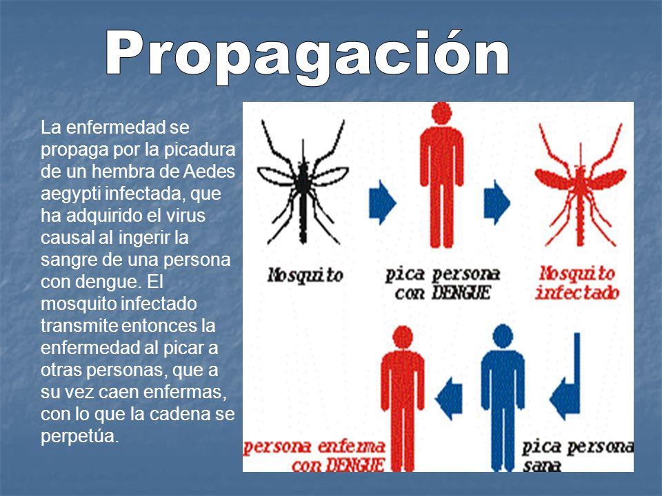 Propagación