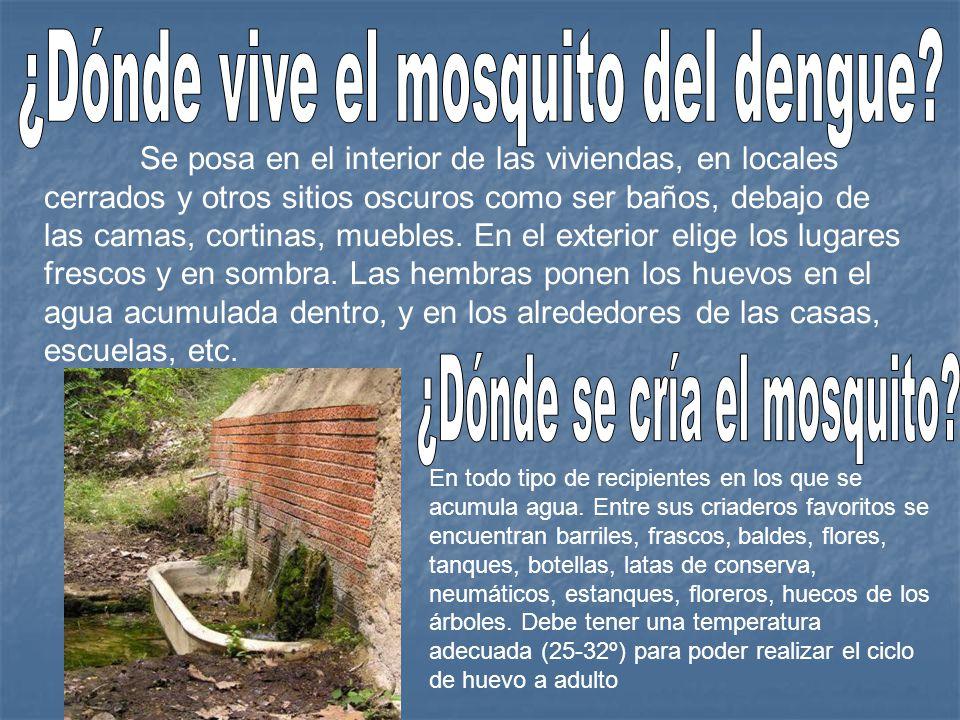 ¿Dónde vive el mosquito del dengue