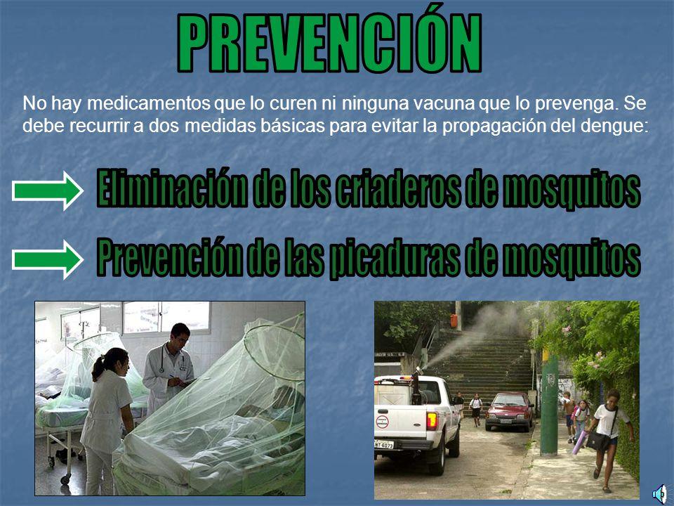 Eliminación de los criaderos de mosquitos