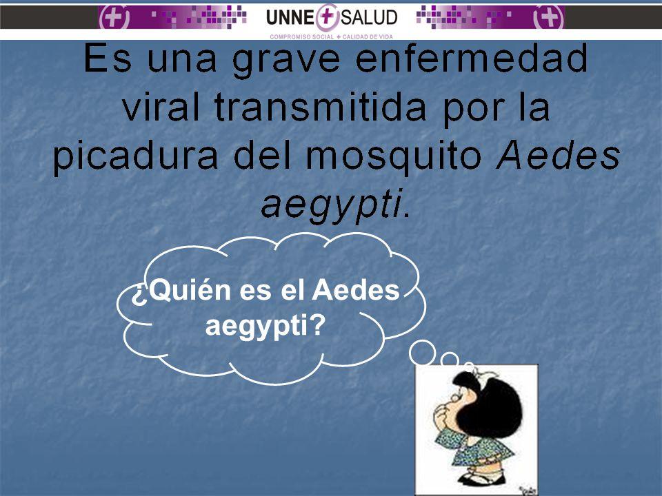 ¿Quién es el Aedes aegypti