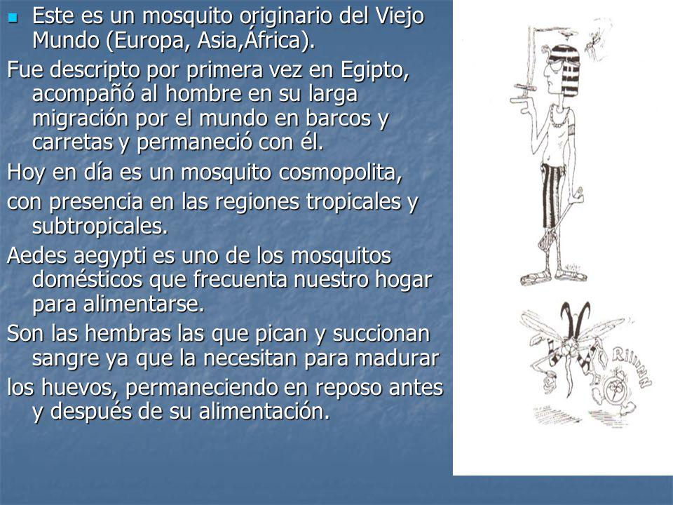 Este es un mosquito originario del Viejo Mundo (Europa, Asia,África).