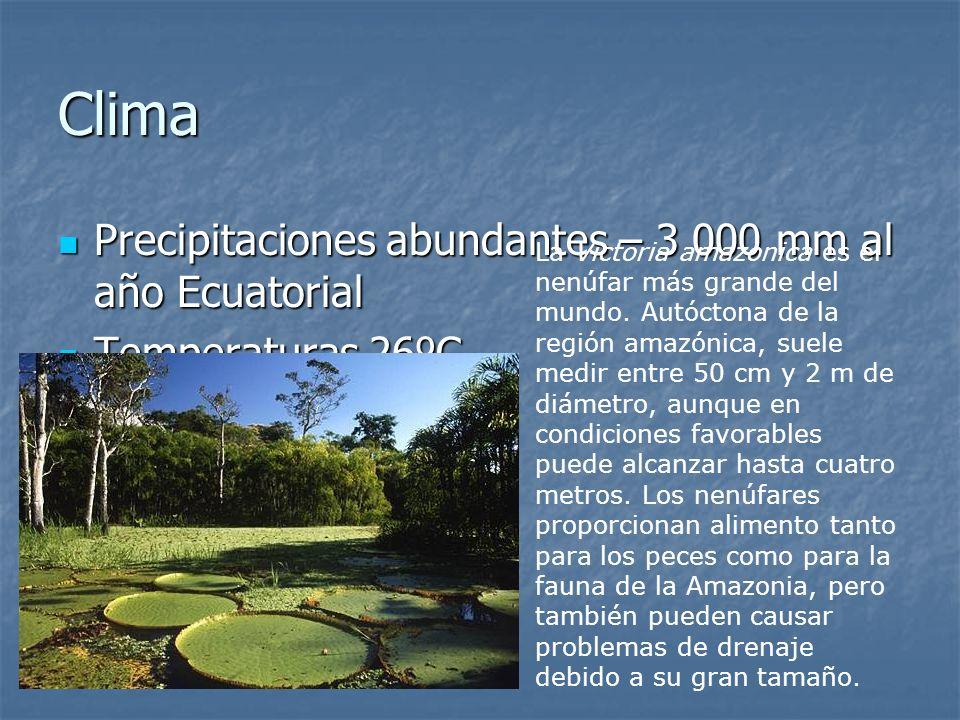 Clima Precipitaciones abundantes – 3 000 mm al año Ecuatorial