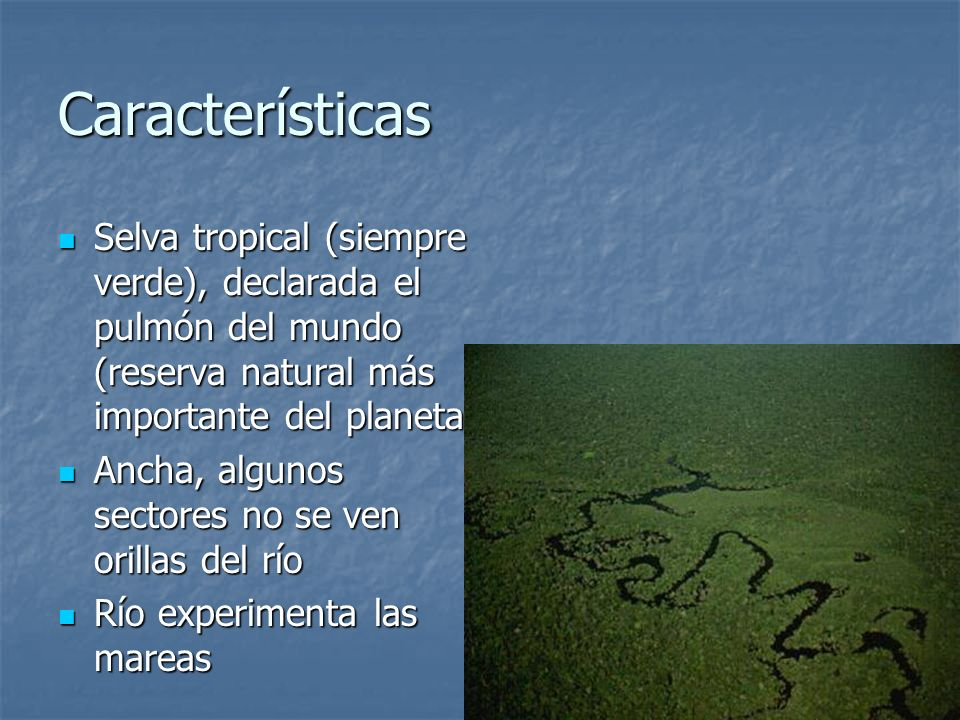 Características Selva tropical (siempre verde), declarada el pulmón del mundo (reserva natural más importante del planeta)