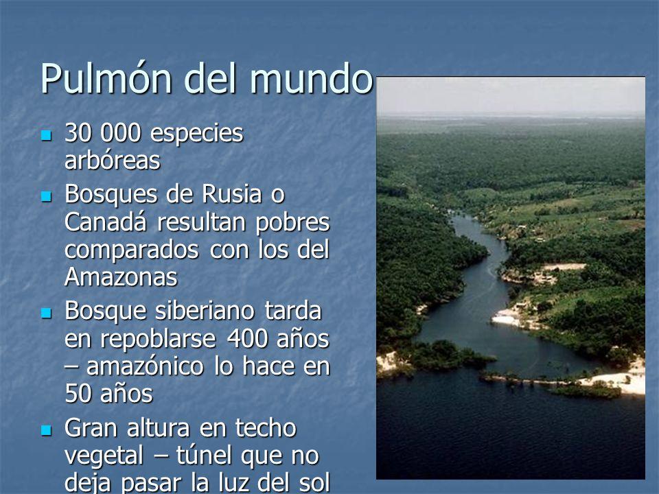 Pulmón del mundo 30 000 especies arbóreas