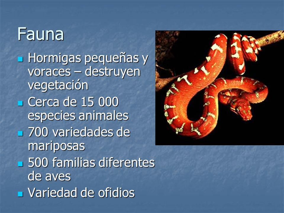 Fauna Hormigas pequeñas y voraces – destruyen vegetación