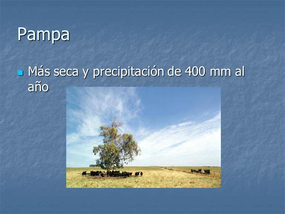 Pampa Más seca y precipitación de 400 mm al año