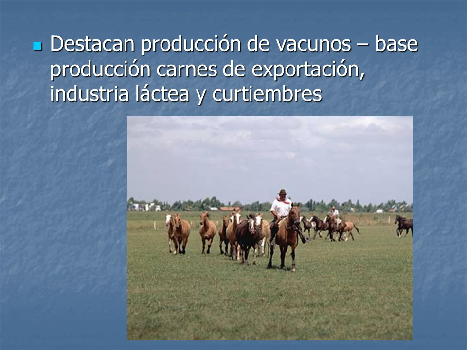 Destacan producción de vacunos – base producción carnes de exportación, industria láctea y curtiembres