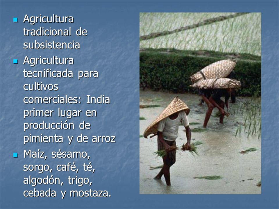Agricultura tradicional de subsistencia