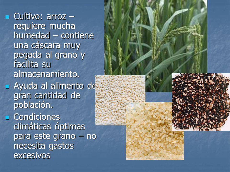 Cultivo: arroz – requiere mucha humedad – contiene una cáscara muy pegada al grano y facilita su almacenamiento.