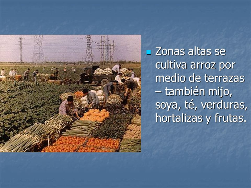 Zonas altas se cultiva arroz por medio de terrazas – también mijo, soya, té, verduras, hortalizas y frutas.