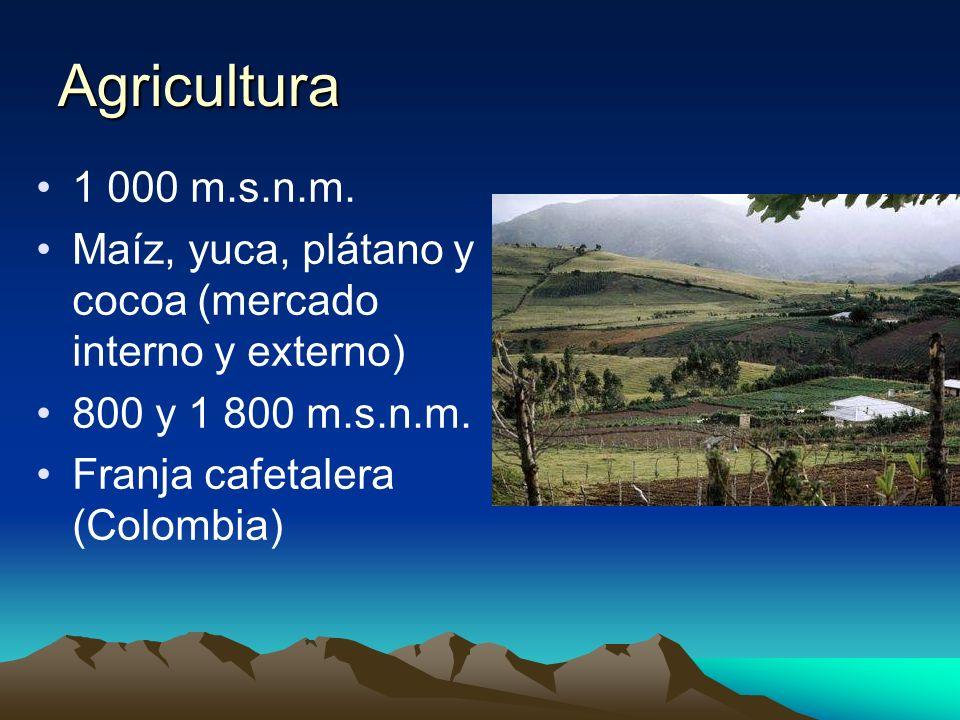 Agricultura 1 000 m.s.n.m. Maíz, yuca, plátano y cocoa (mercado interno y externo) 800 y 1 800 m.s.n.m.