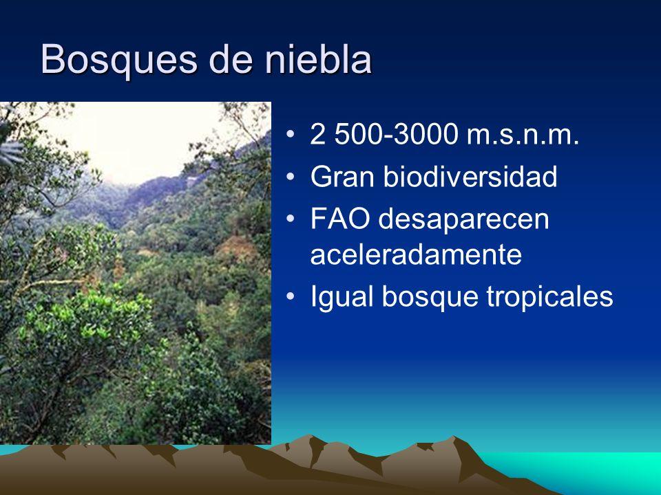 Bosques de niebla 2 500-3000 m.s.n.m. Gran biodiversidad