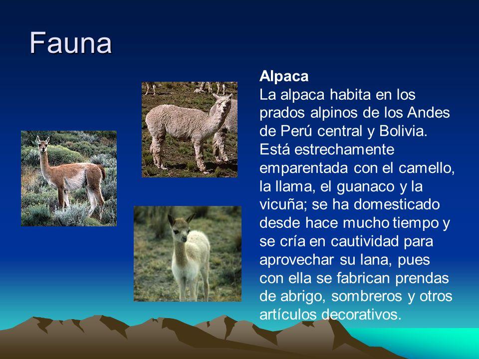Fauna Alpaca.