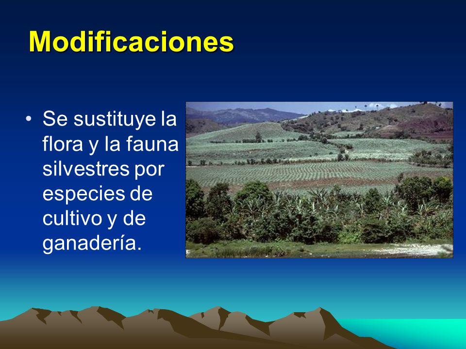 Modificaciones Se sustituye la flora y la fauna silvestres por especies de cultivo y de ganadería.